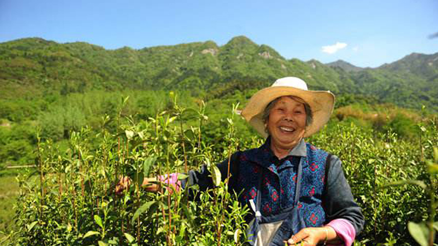 Tea project discovers a fresh blend to end poverty