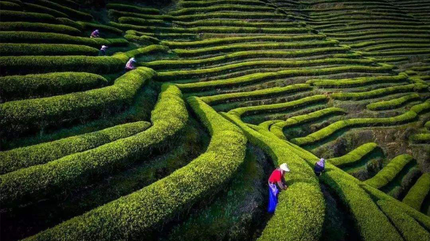 High-speed railway service revives ancient tea road